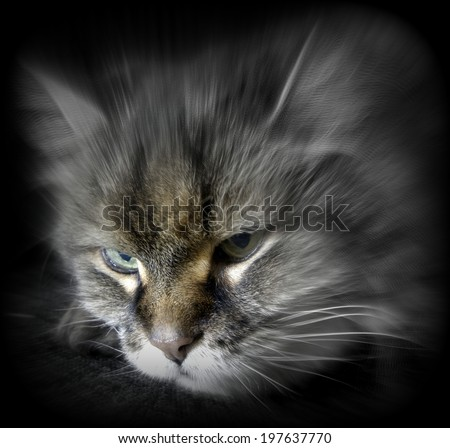 Creepy Cat Eyes ... or perhaps the wisdom shown by the eyes of a 19 year old feline - stock photo
