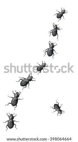 Creepy Crawly Black Beetles Marching In A Line On A White Background - stock photo