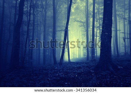 Creepy dark blue saturated foggy forest trees landscape. Color filter effect used. - stock photo