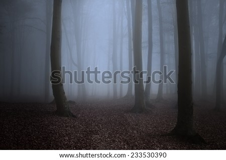 Creepy forest mist - stock photo