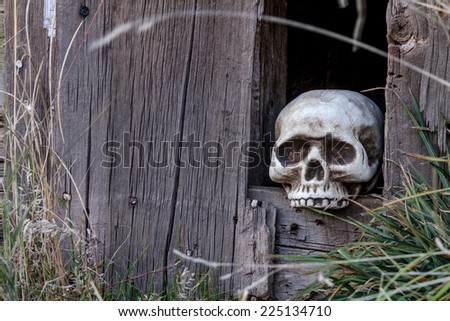 Creepy Halloween skull in hole in old abandoned wood building - stock photo