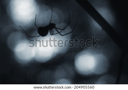 creepy spider silhouette at night - stock photo