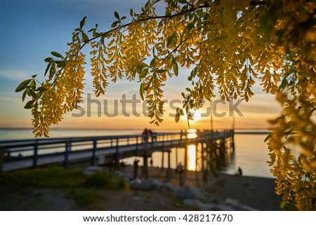 Crescent Flowers. Crescent Beach Pier near White Rock at sundown. Surrey, BC, Canada.                                 - stock photo