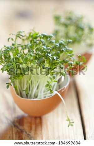 cress salad in an eggshell - stock photo