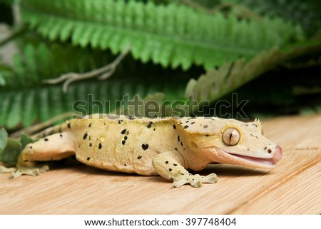 Crested Gecko - stock photo