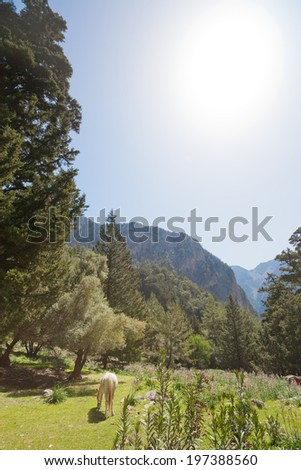 Crete - Greece - Horse within the Samaria Gorge - stock photo