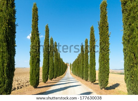 Crete senesi, characteristic landscape in Val d'Orcia (Siena, Tuscany, Italy): country road flanked with cypresses ascending a hill, in a summer afternoon.  - stock photo