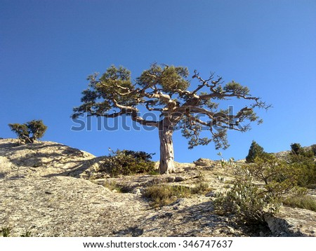Crimean tree high in mountains