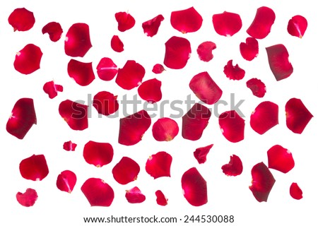 crimson red fresh rose petals isolated on white background - stock photo