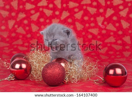 cristmas cat - stock photo