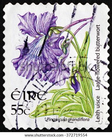 CROATIA ZAGREB, 30 JANUARY 2016: a stamp printed in Ireland shows Large-flowered Butterwort, Pinguicola Grandiflora, Carnivorous Plant, circa 2007 - stock photo