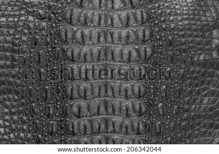 "Crocodile bone skin texture background. This image of Freshwater Crocodile ""Crocodylus siamensis"".This skin is very classic and beauty."