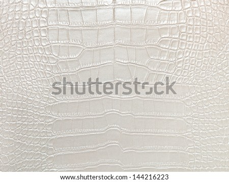 Crocodile bone skin texture background. White Color.