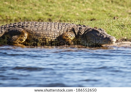 Crocodile - Chobe River, Chobe National Park, Botswana, Africa - stock photo