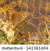 Crocodile eye next to the Chobe River in Southern Africa. Focus on eye, Shallow DOF - stock