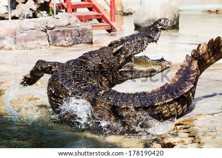 crocodile in thailand - stock photo