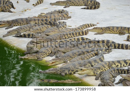 Crocodile in the water - stock photo