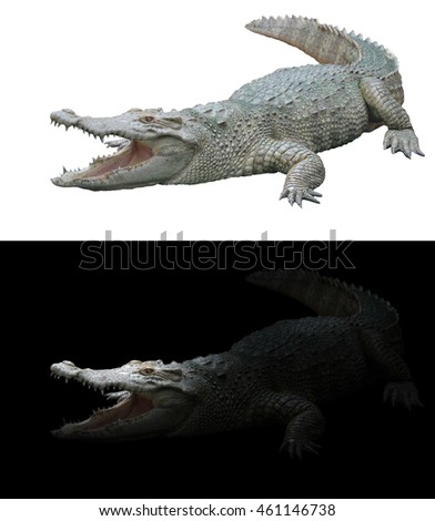 crocodile isolated on white background and crocodile in the dark