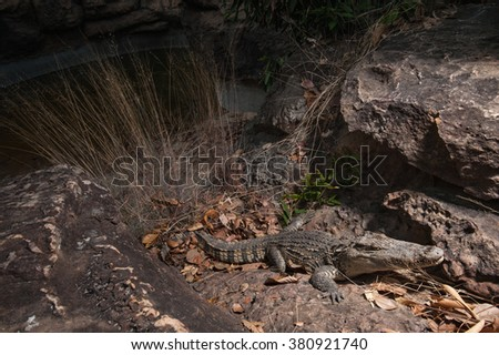 Crocodile or alligator or crocodile swamp, freshwater species are native to Thailand - stock photo