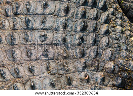 Crocodile skin texture - stock photo