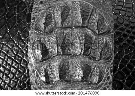 Crocodile skin texture background.    - stock photo