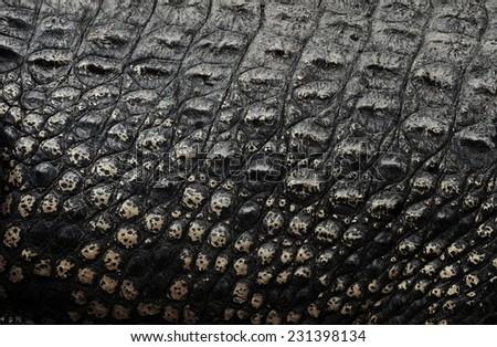 Crocodile skin, texture background. - stock photo