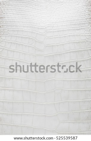 Crocodile skin white leather texture background,genuine crocodile leather pattern,please use these pattern to reduce killing of crocodile purpose