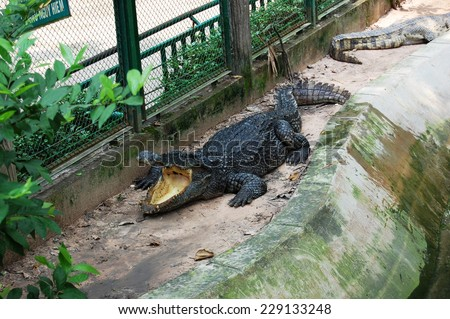 Crocodile with an open jaw is lying near the water  - stock photo
