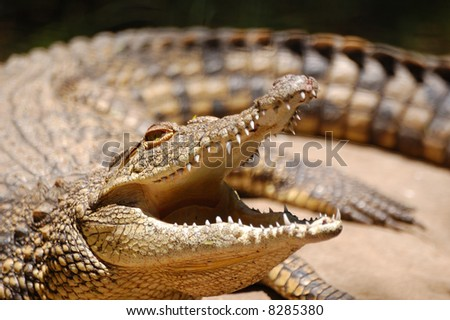 crocodile with mouth open - stock photo