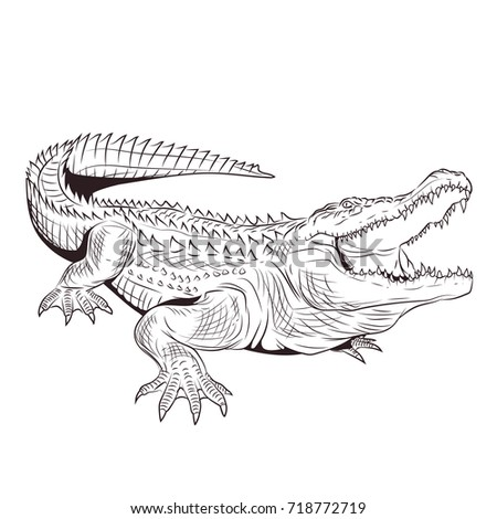 Crocodile Open Mouth Adult Coloring Page Stock Illustration ...