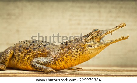 Crocodile with open mouth. Photo tinted in yellow  - stock photo