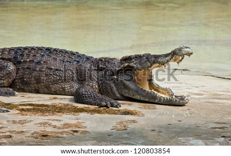 crocodile with open mouth resting in water - stock photo