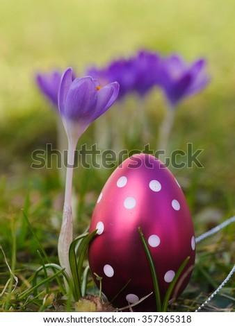 crocus with easter eggs on meadow - stock photo
