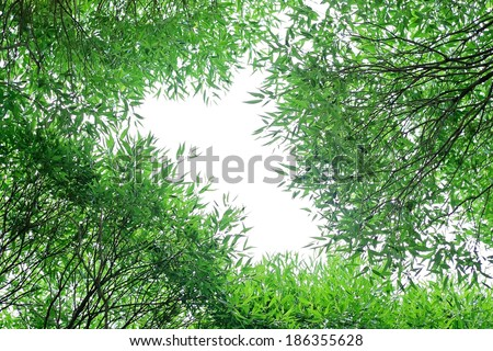 crone of a willow tree on white - stock photo