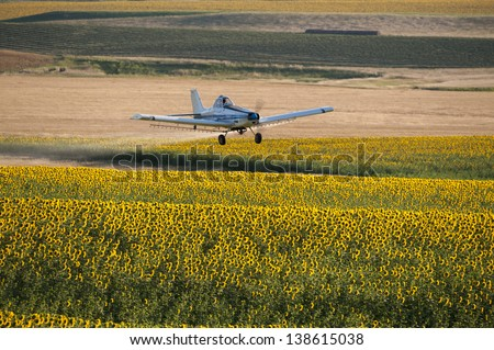Crop duster flying low over a field of sunflowers spraying pesticide, Montana, USA - stock photo