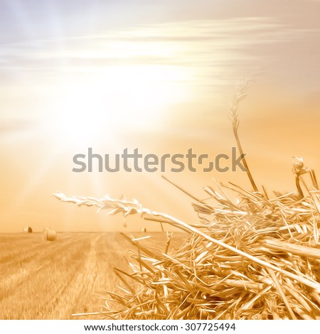 Crop field in soft gold colors in vintage style - healthy lifestyle background - photo with oil paint filter - stock photo