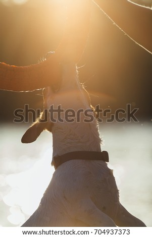 Crop person holding toy and dog biting it in jump in bright back lit.