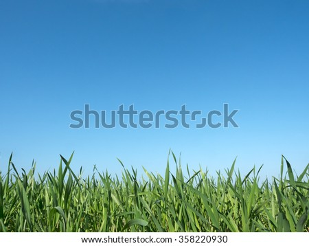 Crop plants in the field in springtime - stock photo