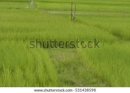 crop rices,Select Focus and Blur