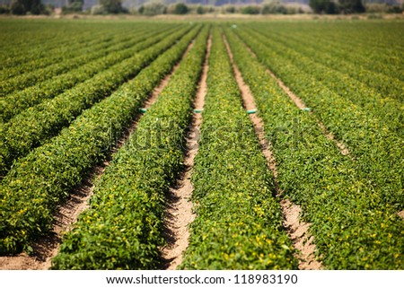 Croplands with green vegetables culture in Portugal - stock photo