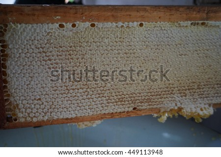 Cropped image of beekeeper removing honeycomb frames from crate at apiary worker - stock photo