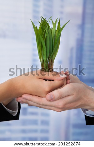Cropped image of business people holding saplings in office