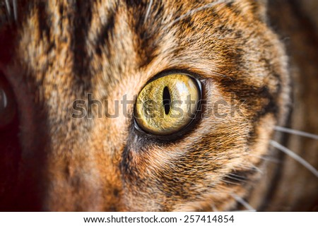 cropped shot of eye of cat looking fixedly - stock photo