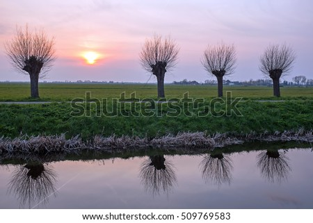 Cropped willows in a dutch landscape at sunset