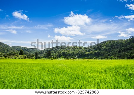 Crops growing in a field in the countryside , Chiang Mai Thailand. - stock photo
