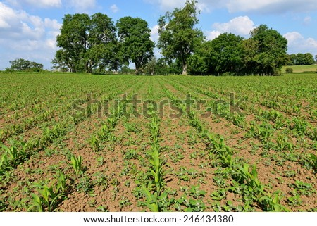 Crops Growing in Rows on a Ploughed Farmland Field - stock photo