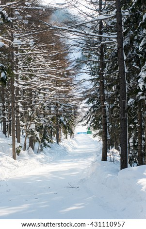 Cross-country Ski Track winter forest ski trail