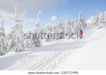 Cross country skiing - stock photo