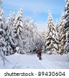 cross country skiing tourist in snow cowered wood - stock photo