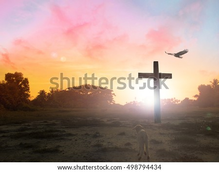 Cross?Flocks, lambs, shepherds,Cross. Blur, Autumn, Glorify, Peace, Bless, Amen, Religion, Hosanna, Lent, God, Mercy, Gospel, Crucifix , Hill, Worthy, Painful, Truth, Seek, Aim, Destination, Mission,